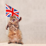THE CAT IS ON THE TABLE! IL CORSO DI INGLESE DEL SINDACATO